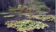 Water Lilies 65Χ85 εκ. by Monet No 2 -65Χ85